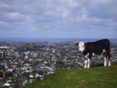 On The Edge: Mount Eden