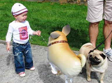 Picture taken in Takapuna at the annual pug meeting.