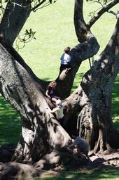 Tree climbing in Cornwall Park