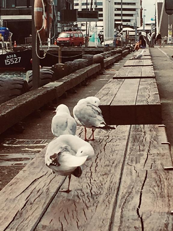 Birds on North Wharf