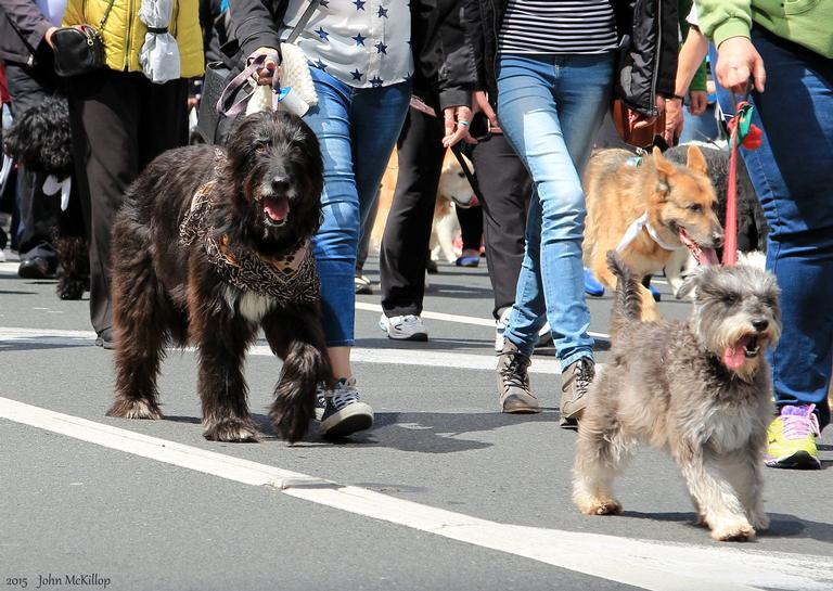 Auckland's Annual Animal Blessing Parade
