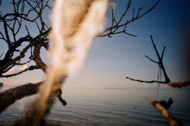 Jenny Partington; Branches; Branches at Herring Cove shot with 35mm kodak colour plus film on amateur film camera.