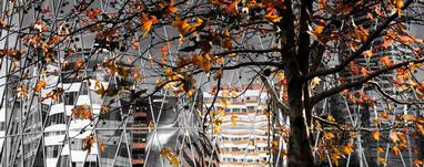 Kerry Marinkovich;Abstract Autumn Architecture