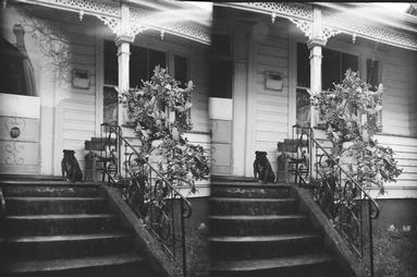 Ross Hamilton;Grumpy Dog on Franklin Road (in Stereoscopic 3D!)