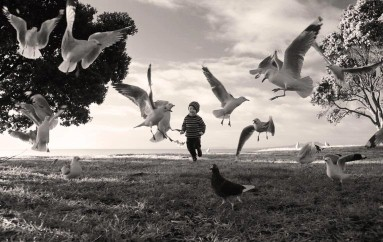 Angela Taft Chasing The Birds
