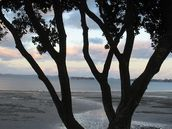 Katyanne Topping; What do you see between the branches?; Taken at Howick Beach.