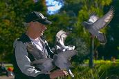 John Ling; Passion between men & birds; It was taken in Auckland Domain this month