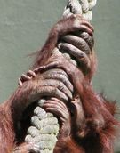 Jerry Zinn;HANDS ON.;TAKEN AT AUCKLAND ZOO WITH A FOCAL LENGTH OT 1728MM (35MM EQIV ]