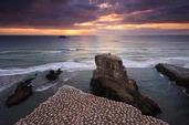 Chris Gin; Muriwai; Sunset at Muriwai, overlooking the gannet colony.