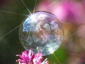 Madeleine Hopkins;Bubble World; This is a soap bubble, straight out of the camera (no post processing).