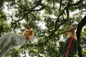 Lindsey Watson; Epic Tree with the Parkour kids; Jared Lamont and Amadeus Diamond City Central