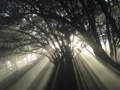 Ed Adam;First rays;Auckland morning fog