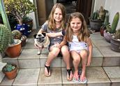 JERRY ZINN.;EVERYONE LOVES BELLA THE PUG.
