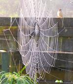 Stuart Weekes;Perfectly Empty Web;Cold morning didn't stop the spider's work, or the bird's observation !