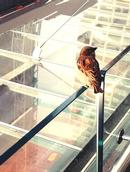 Stuart Weekes;Looking for a nesting site !;Sparrow surveying a major construction project